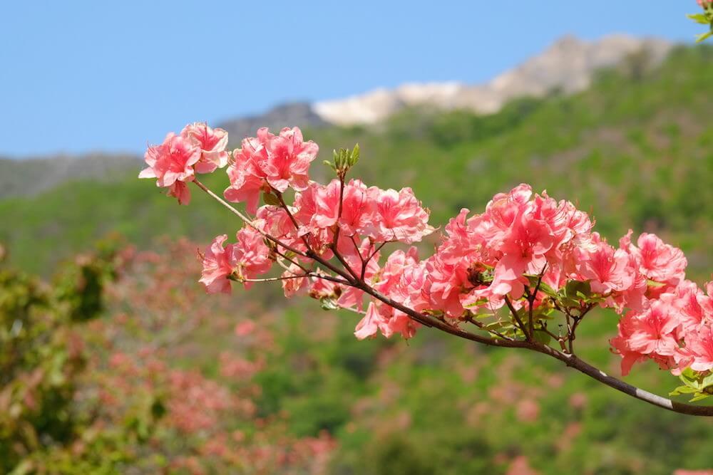 山に映える紅色がキレイ!