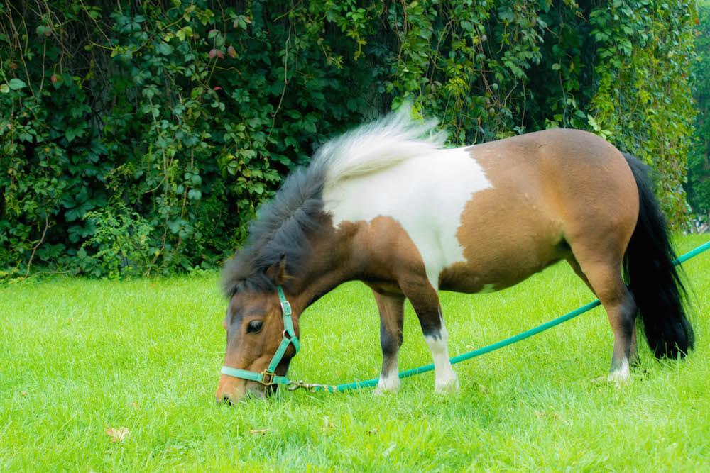 northern-horsepark-10