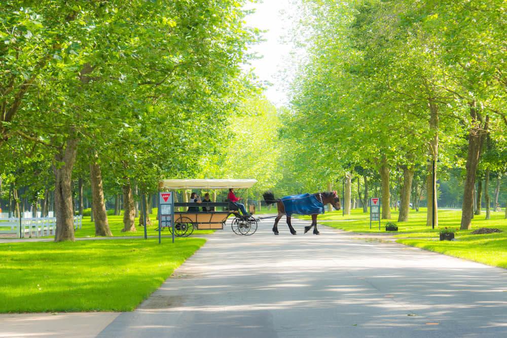 northern-horsepark-5