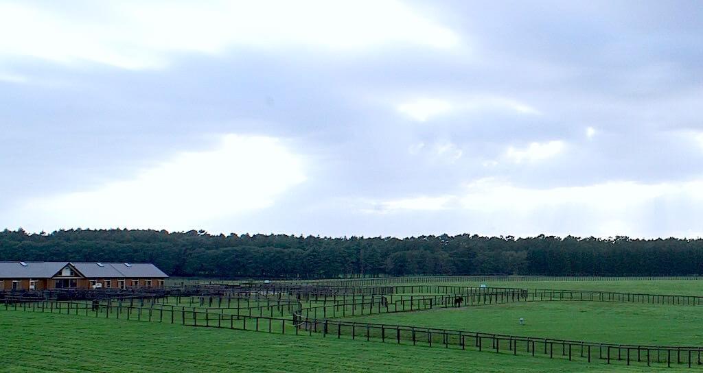 中央に馬がたたずんでいます。