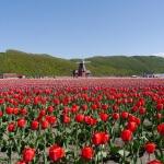 春に行きたい!北海道おすすめドライブコース