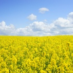 5月6月は北海道へ!花にグルメに漫画まで!?春のイベント10個まとめ